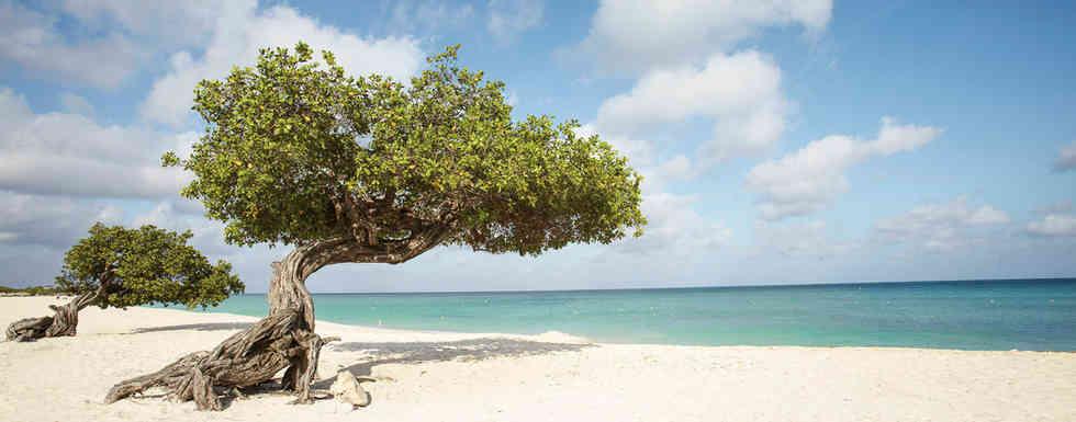 Aruba1.jpg