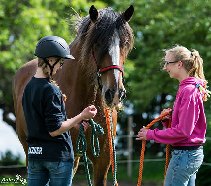 Skills Development - Equine Assisted Learning