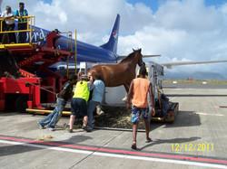 Bailie Leaving Mauritius
