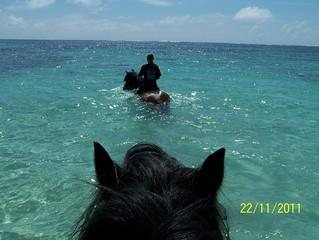 Week 11 in Mauritius