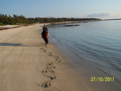 Bailie in Mauritius
