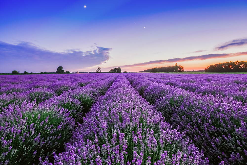 Provence Lavender Fields - Where to travel in July Food Travel More blog