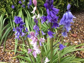 Garden Jobs for May