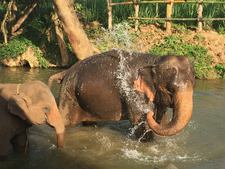 Pick the right Elephant Sanctuary
