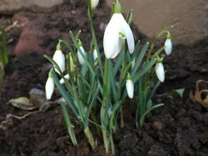 Garden Jobs for February