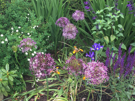 Bee Kind .. in the garden