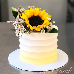 Ombre yellow sunflower