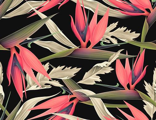 熱帯パターン