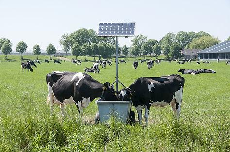 solar-pump-for-livestock-kenya.jpg