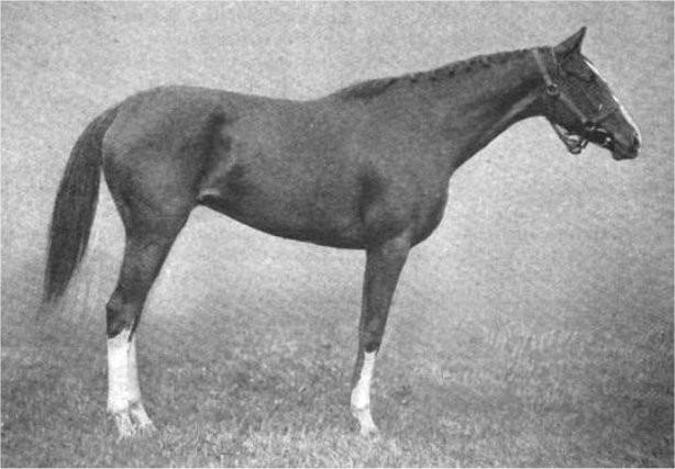 1905 Belmont Stakes winner Tanya, filly Belmont Stakes winner