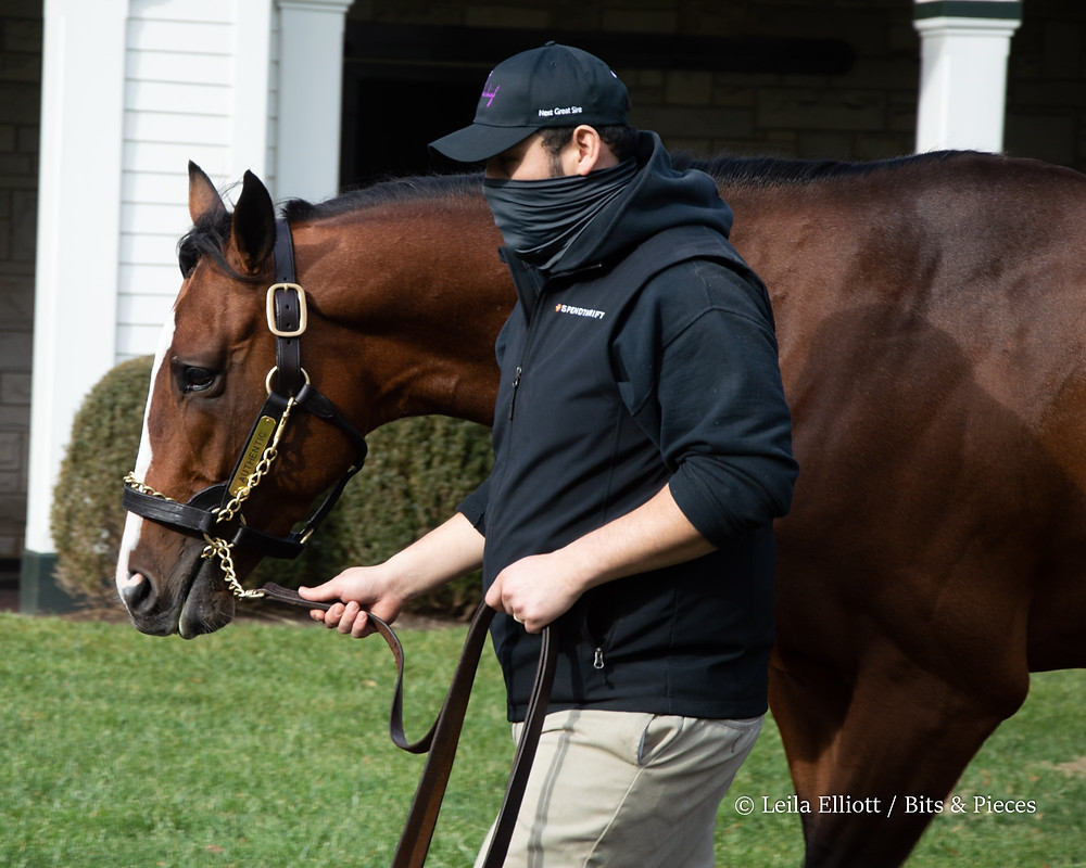 MyRacehore Stable Horse of the Year Authentic at Spendthrift Farm