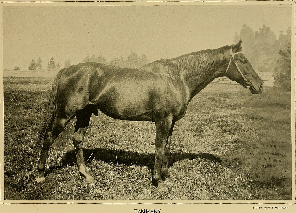 Tammany racehorse with a Montana castle