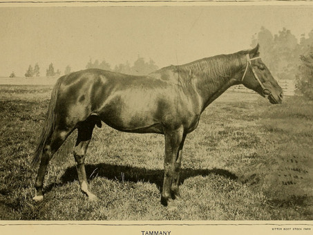Tammany: A Racehorse Worthy of His Own Castle