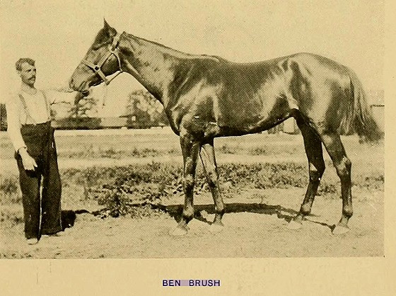 Champion racehorse and sire Ben Brush, winner of 1896 Kentucky Derby