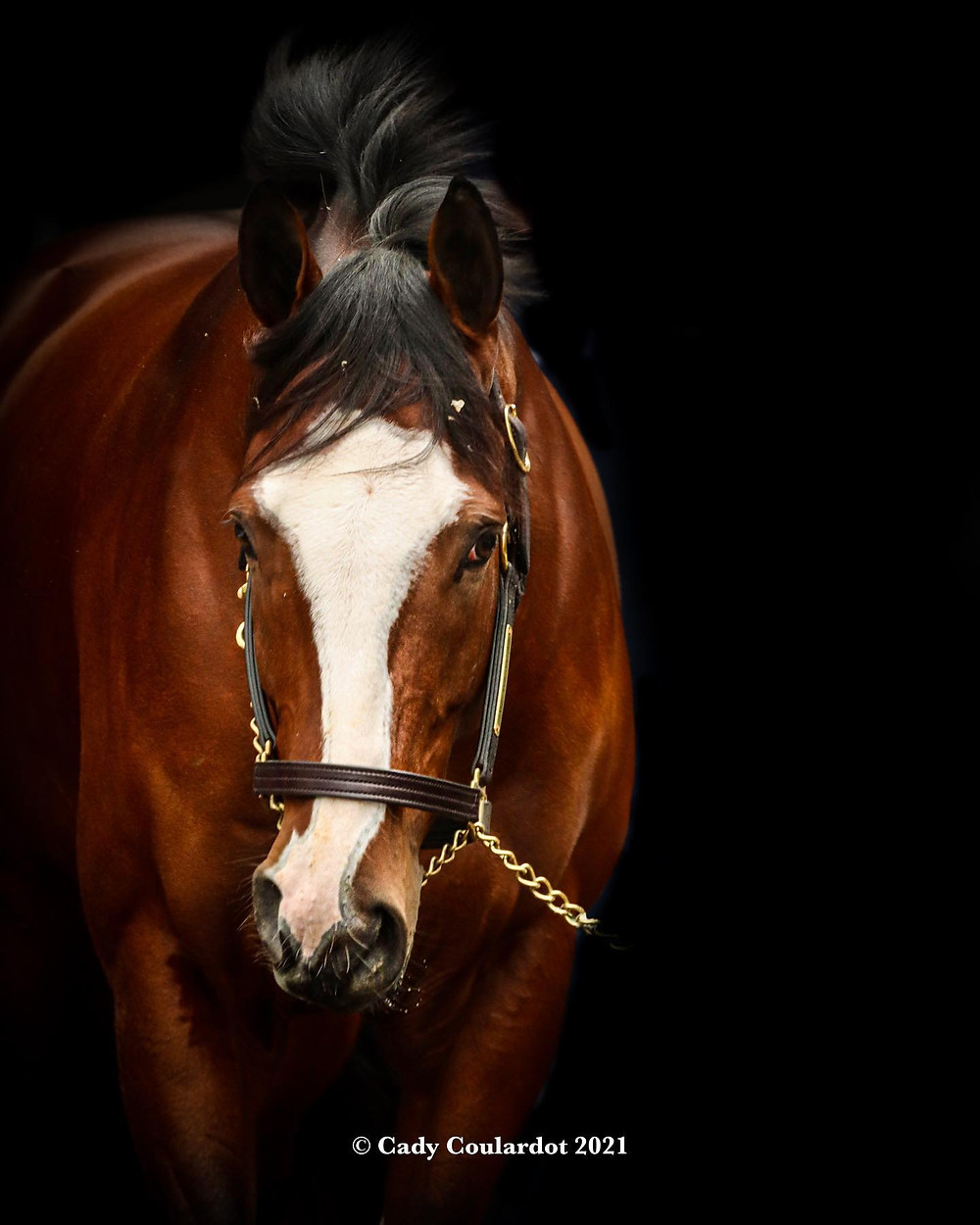 Belmont Stakes & Travers Stakes winner Tiz the Law, Constitution sire