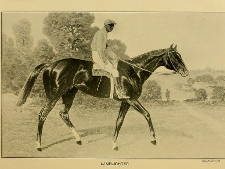 "Lamplighter: ""Co-Champion Handicap Horse"" of 1893"