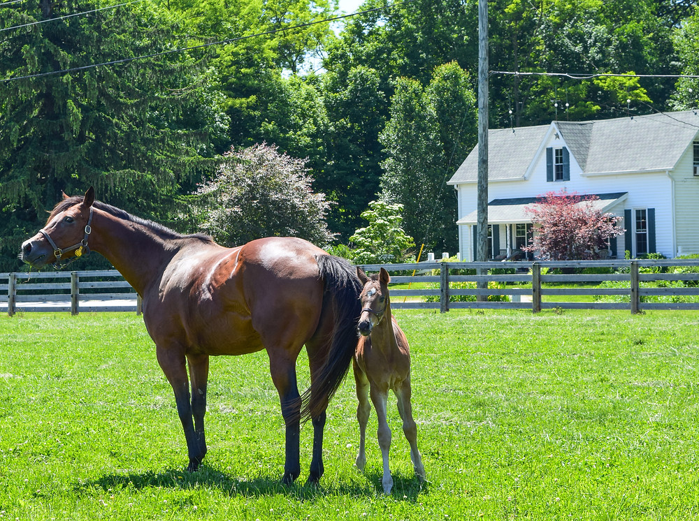 Paynter colt at Springcliff Farm in Indiana