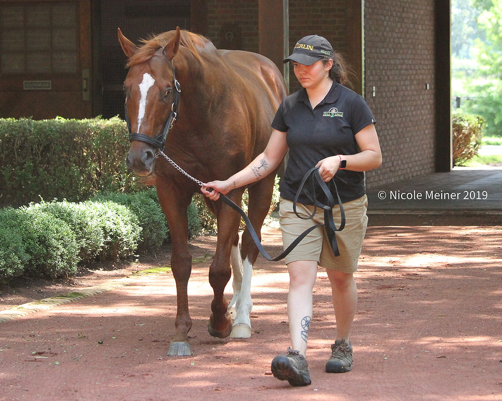 Curlin racehorse and groom Christina during a tour of Hill n' Dale Farm