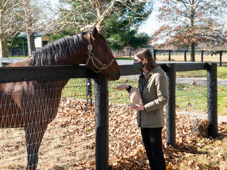 Visit Horse Country: The Mill Ridge Experience