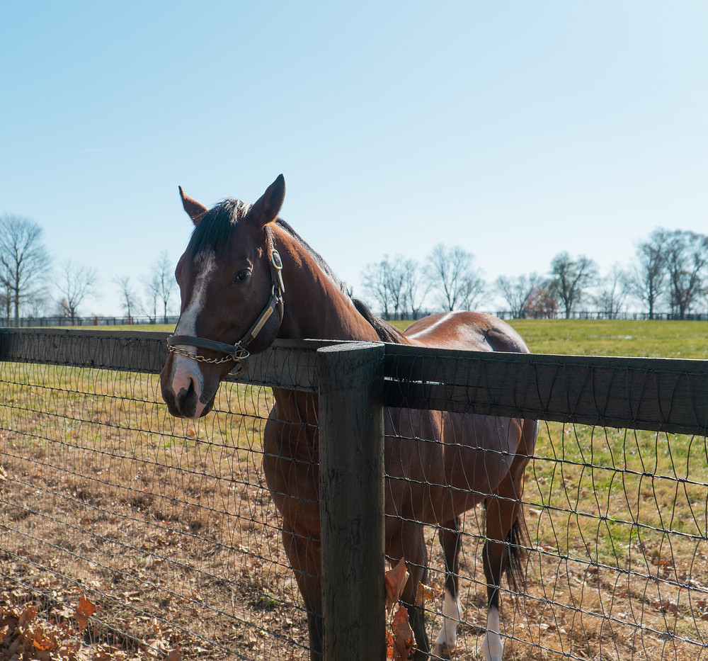 Breeders' Cup winner Oscar Performance at Mill Ridge Farm, Visit Horse Country tour