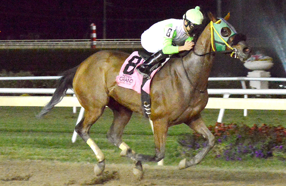 Lady Fog Horn, Indiana-bred & Indiana-sired Highest Earning Filly, at Indiana Grand. Frances Slocum Stakes.