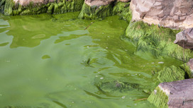 Manitoba Liberals Release Plan to Save Lake Winnipeg