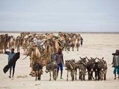 #7 Ethiopia - Salt Mining