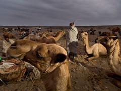 #14 Ethiopia - Salt Mining