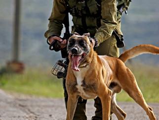 Oketz - Canine Unit