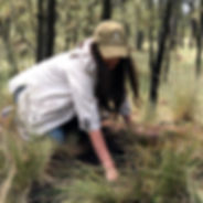 matcha kaori, matcha, reforestacion