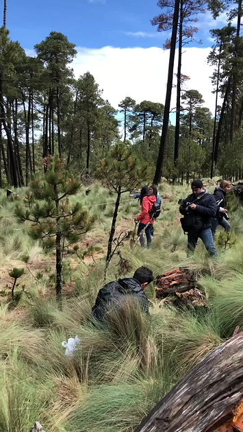 matcha kaori, reforestacion, piensa verde, #cdmxmuymatcha