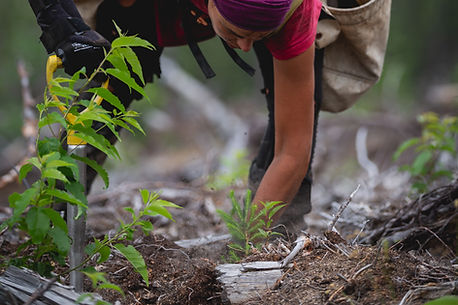 One Tree Planted012.jpg