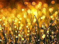 Soft lights and wet grass