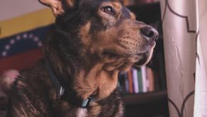 Préparer nos chiens au déconfinement