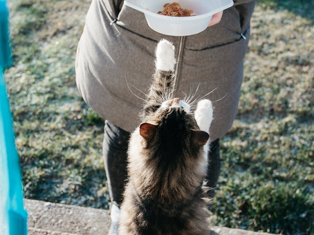 Chat gourmet ou chat gourmand ?