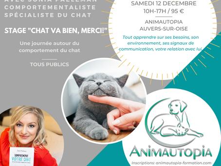 """Stage : """" Chat va bien, merci ! """" avec Sonia Paeleman - Le 12 décembre 2020"""