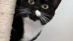 L'implication du propriétaire dans l'enrichissement du milieu de vie du chat