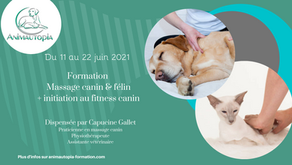 Formation Massage canin & félin + Initiation au fitness canin - entre le 11 et le 22 juin 2021