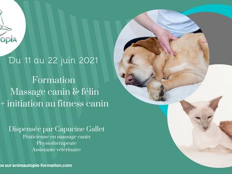 Formation Massage canin & félin + Initiation au fitness canin - entre le 11 et le 22 juin 2021