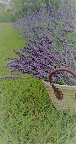 Basket_lavender_sickle_edited.jpg