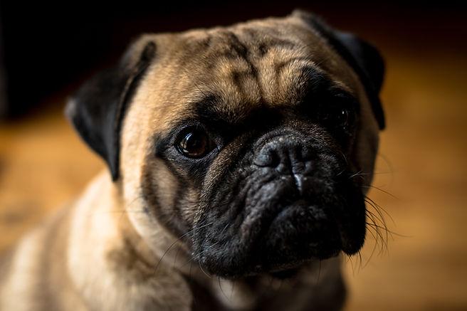 websitedog (6 of 13).jpg