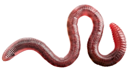 default_worm1_edited_edited.png