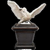 DSvT_Swan-CLIP_edited.png