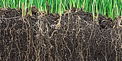 what-is-soil-why-is-soil-important-1.jpg