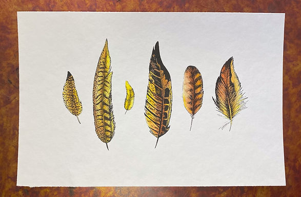 Feathers Y 001