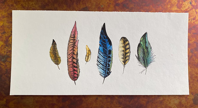 Feathers Multi 001