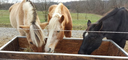 Horses...hopeful!