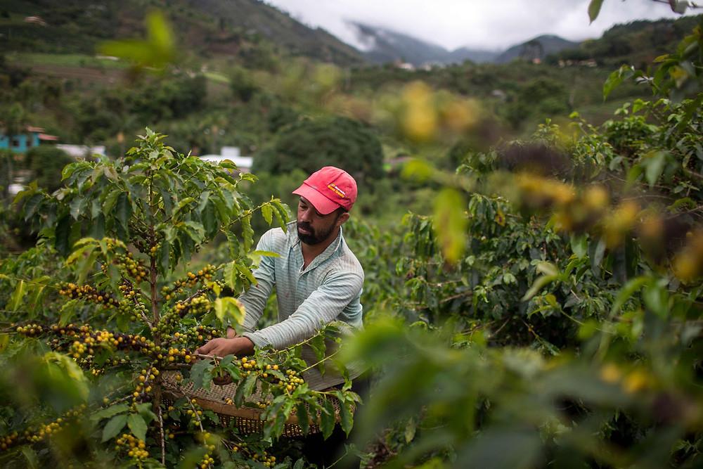 Происхождение кофе: Бразилия