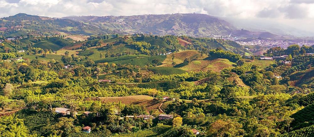 Происхождение кофе: Колумбия