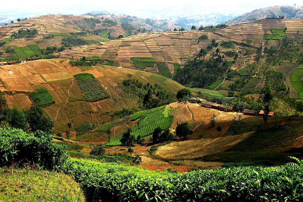 Происхождение кофе: Бурунди
